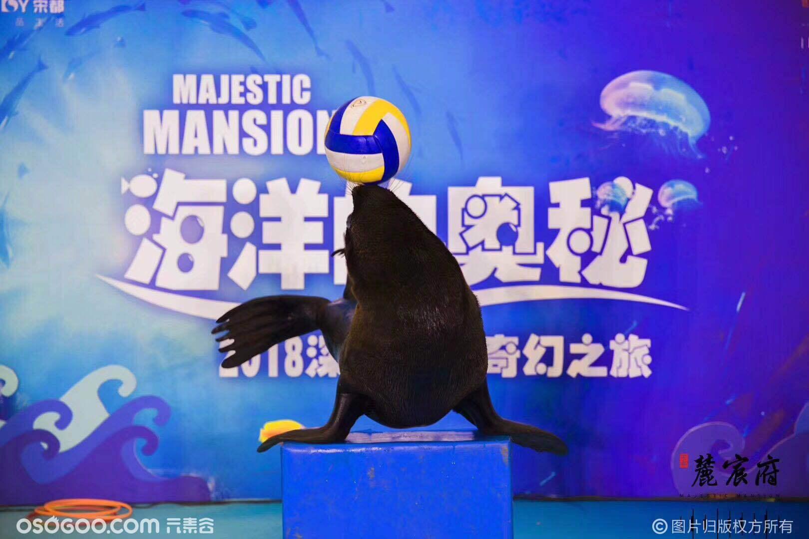 江浙沪周边海狮表演海狮出租动物表演庆典演出项目
