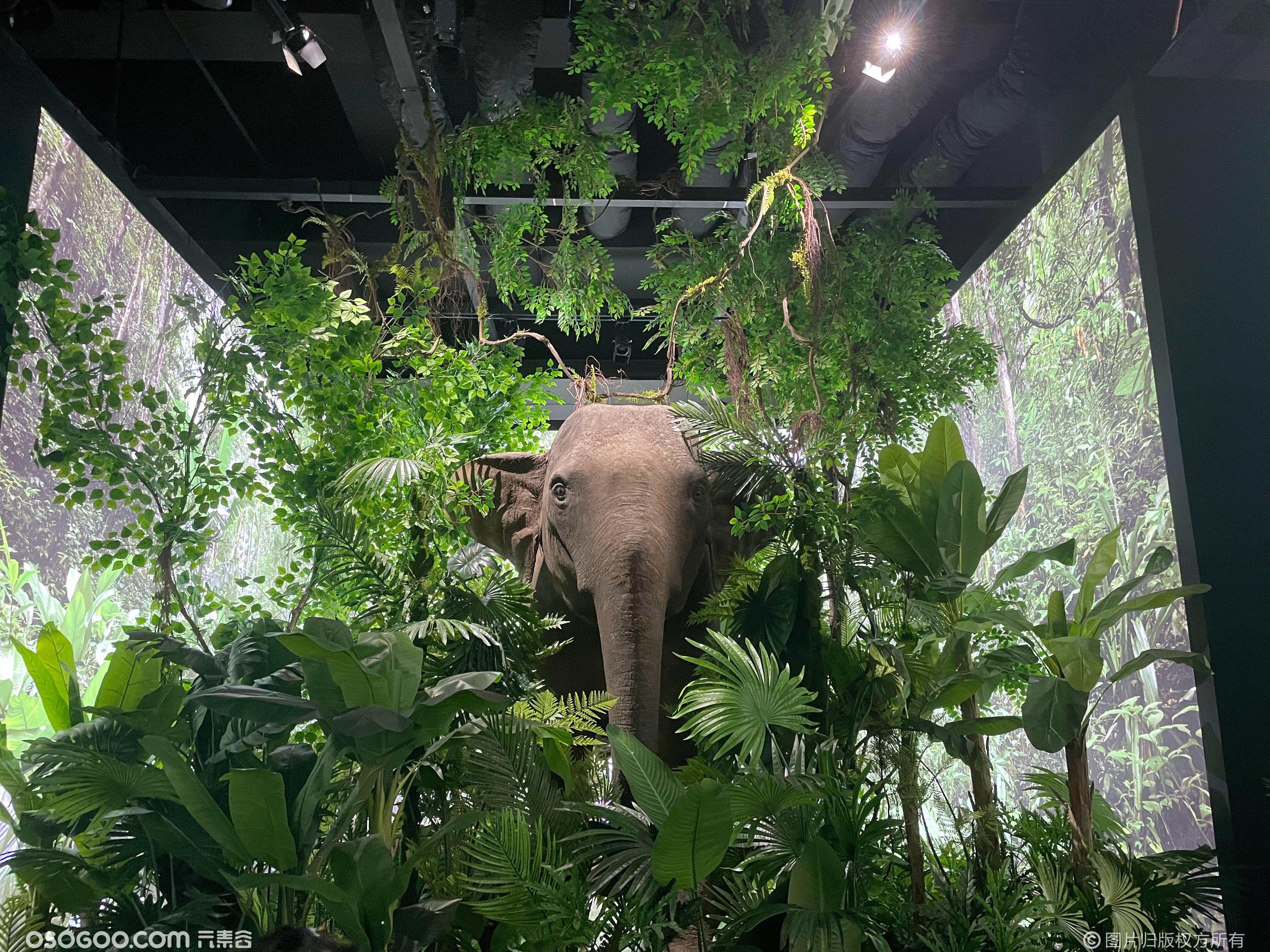 亚洲象保护公益展|沿着大象的纹路
