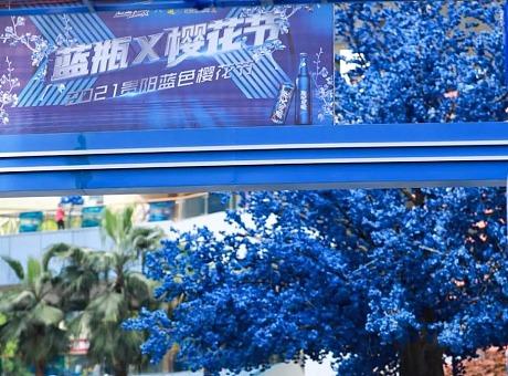 2021贵阳蓝色樱花节