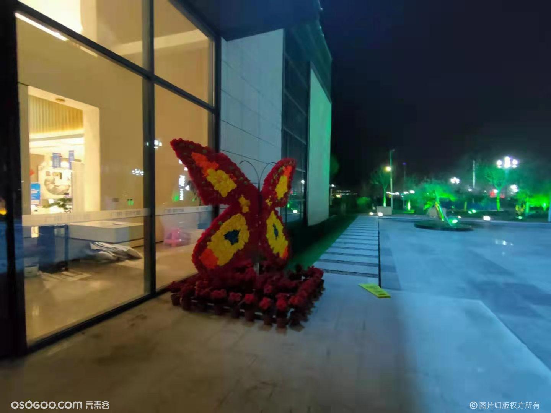 定西广银时代城蝴蝶展案例展示
