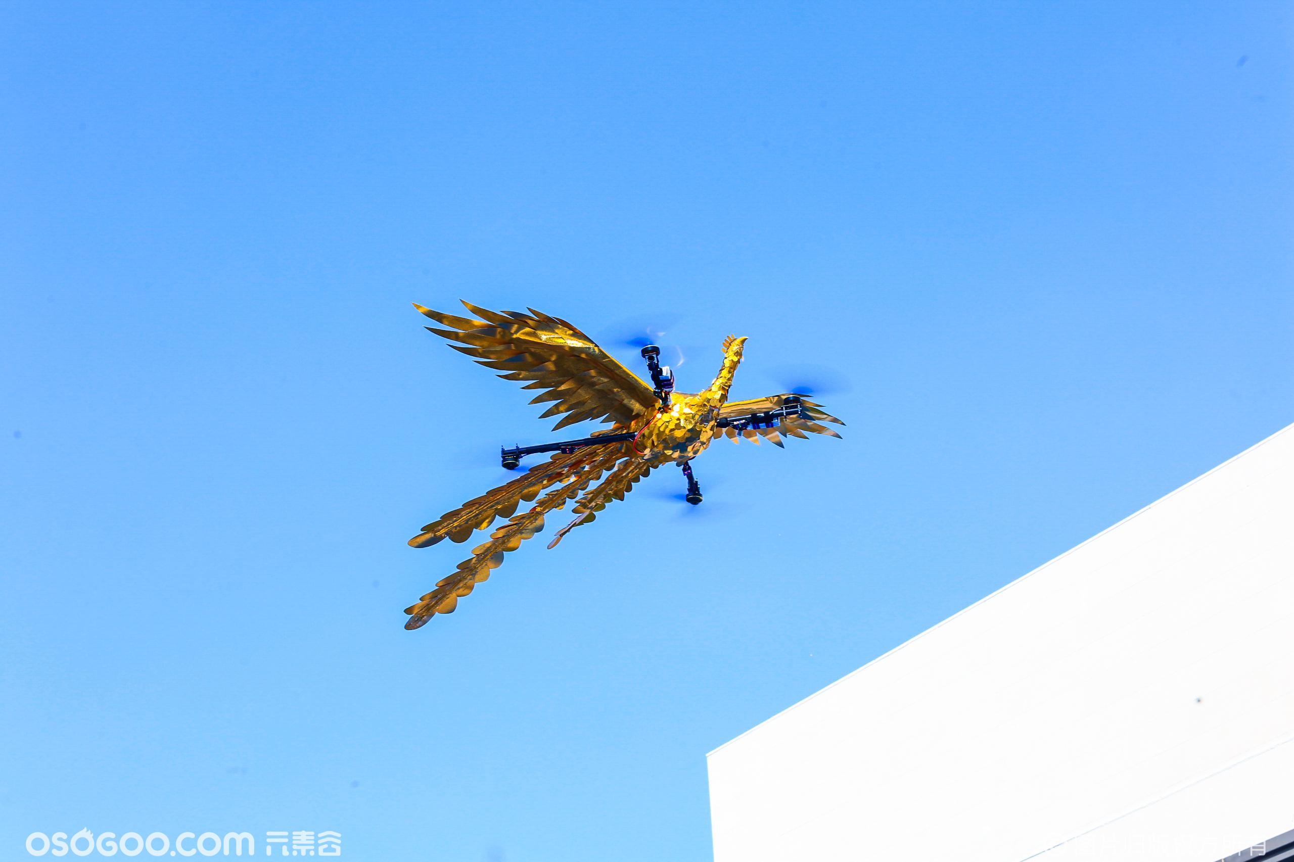 郑州蓝城 凤起潮鸣-凤凰无人机