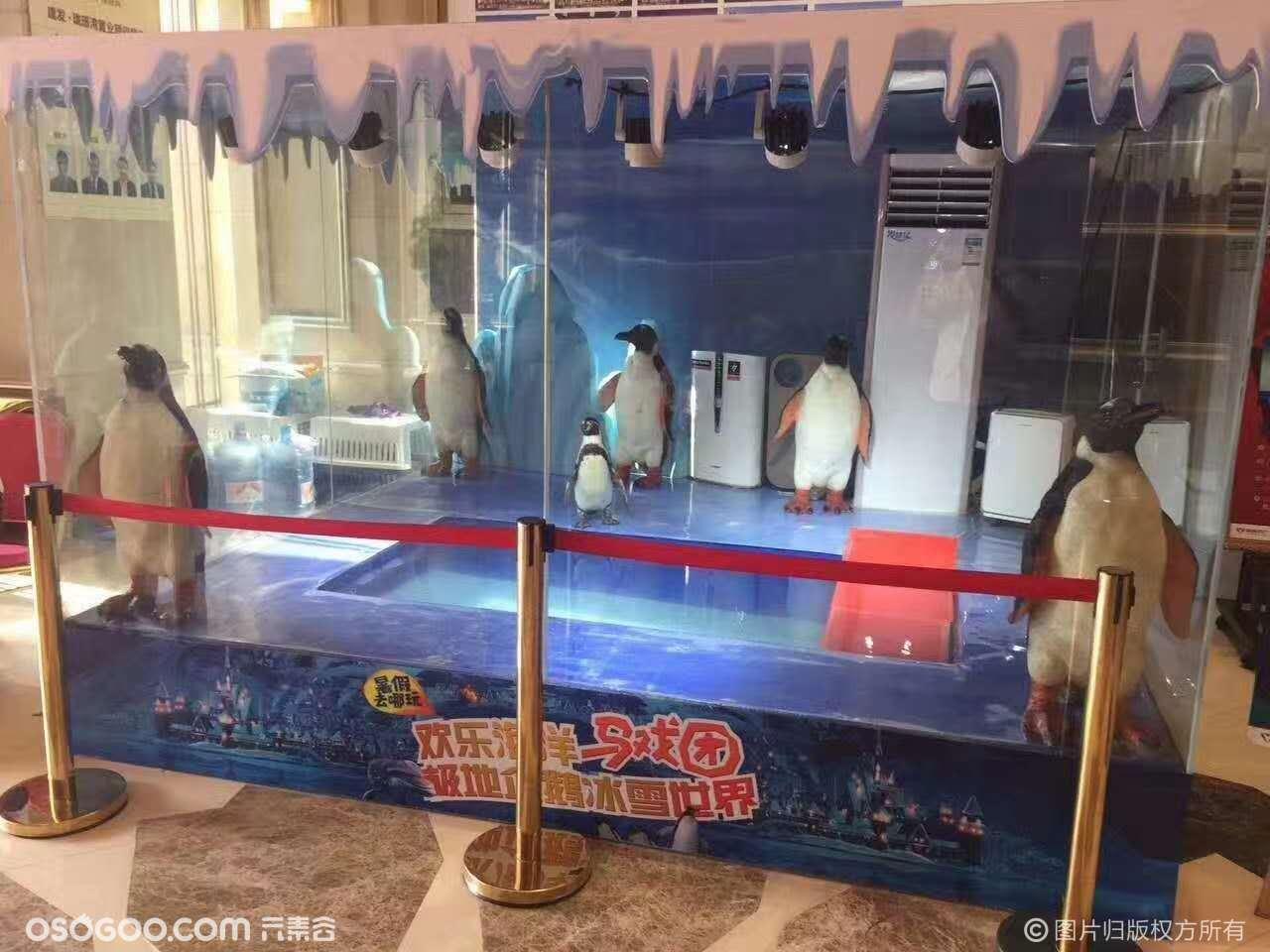 麦哲伦企鹅静态展览