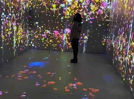 与花共舞蝶舞花海VR梦幻鲸鱼岛出租与花之森融为一体