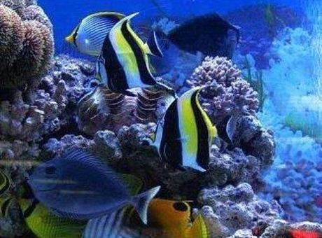 海洋展、美人鱼表演、海狮表演活动案例分析