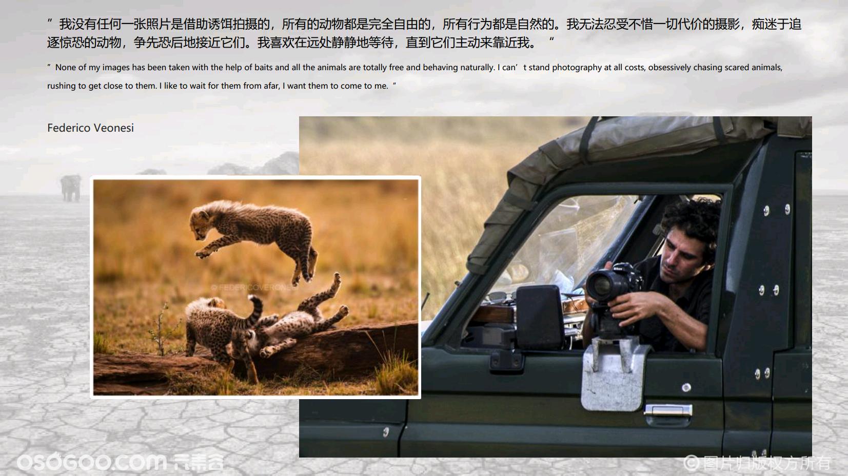 2020-意大利摄影师费德里科·韦罗内西-(动物保护协会荣誉