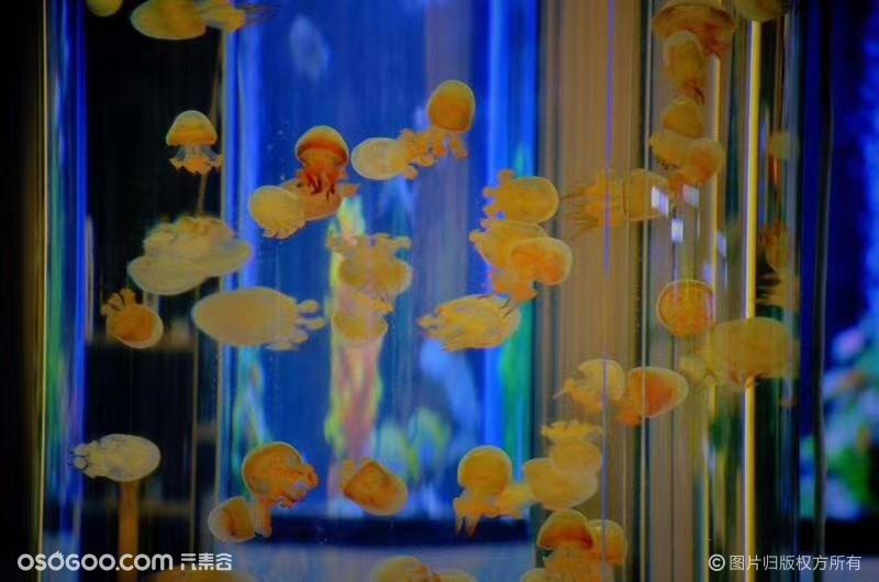 海洋主题展览出租海洋展出租海狮海豚表演展租赁价格