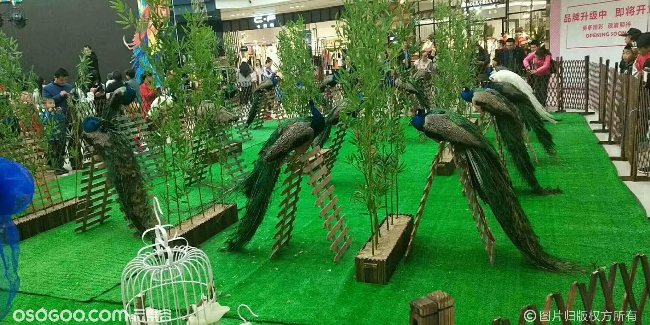 百鸟园主题活动 租赁百鸟展资源 鹦鹉表演出租