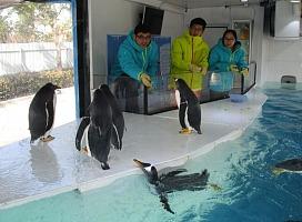 北极企鹅降临,可爱企鹅展租赁