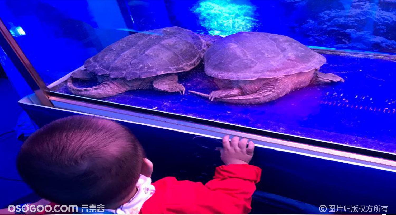 海洋生物展美人鱼表演海狮表演海底生物观赏出租